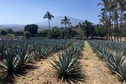 Tequila Weekend with Expert Clayton Szczech
