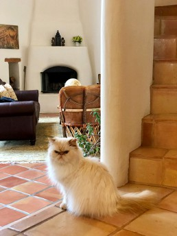 Villa Agave Stairs Cat